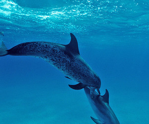 dolfins and 2 dolphins image