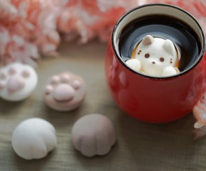 cat, coffee, and gale image