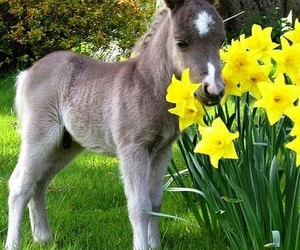 horse, pony, and flowers image