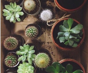 flowers, plants, and cactus image