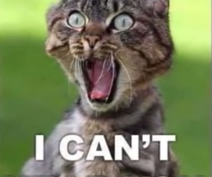 cat, funny, and hear image