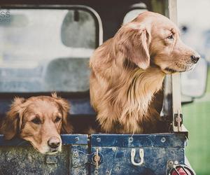 dog and vintage image
