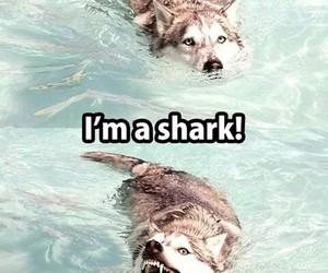shark, dog, and funny image