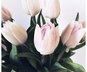 flower, pink, and beauty image