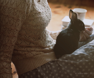 bunny, light, and netherland image