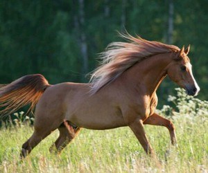 forest, horse, and run image