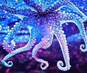 octopus, blue, and purple image