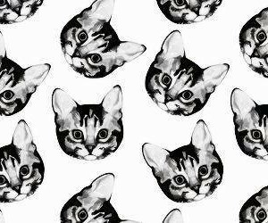 background, cats, and cute image