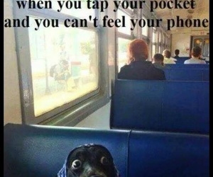 lol, dog, and funny image