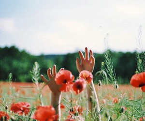colorful, tumblr, and flowers image