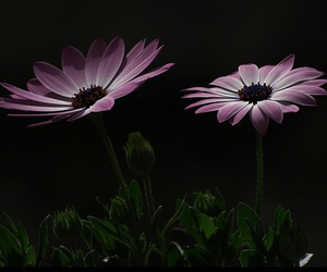 dark and flowers image