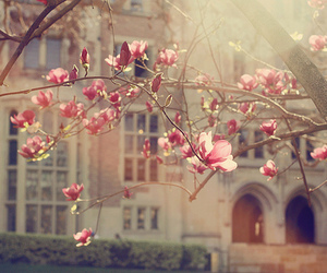 flower, magnolia, and flowers image