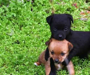 puppy and dog image
