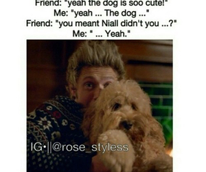 niall horan, cute, and dog image