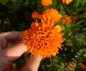flower, garden, and green image