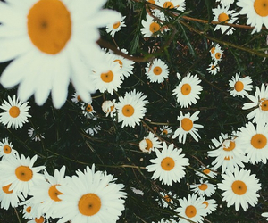 flowers, tumblr, and hipster image
