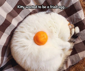 cat, fried egg, and funny image