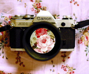 flowers, camera, and canon image