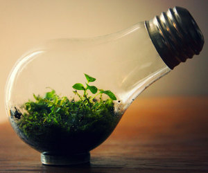 photography, nature, and bulb image