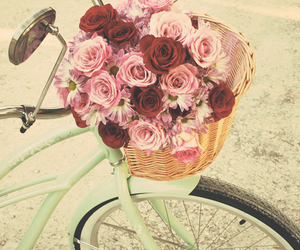 girls, roses, and bice image