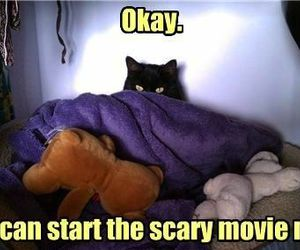 cat, movie, and funny image