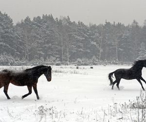 cold, freedom, and horses image