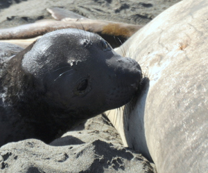 baby animals, photography, and seal image