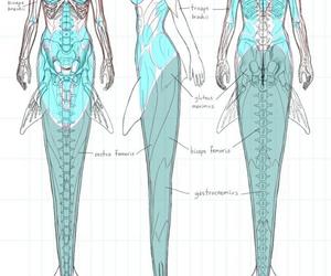 mermaid, anatomy, and drawing image