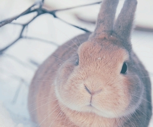 rabbit, winter, and cute image