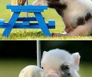 pig, cute, and ice cream image