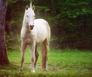 unicorn, horse, and nature image