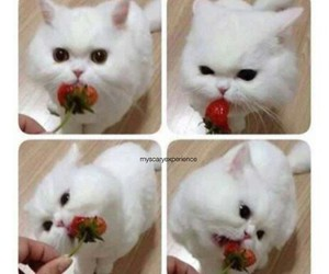 cat, strawberry, and cute image
