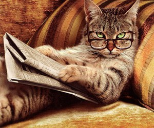 cat, funny, and glasses image