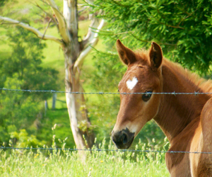horses, foal, and aus image
