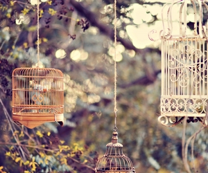 beautiful, cage, and life image