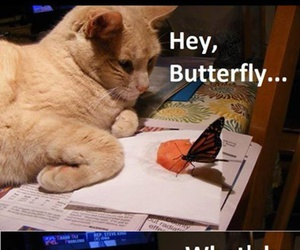 butterfly, cat, and funny image