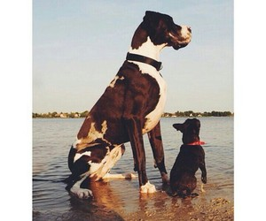 big, dogs, and great dane image