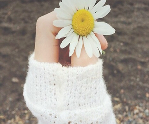 daisy, flowers, and hand image