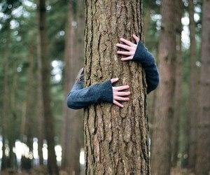 hug, tree, and kiss image