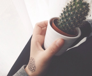 tumblr, cactus, and tattoo image