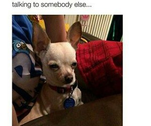 bae, funny, and dog image