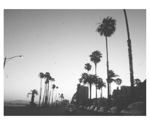 black and white, california, and beach image
