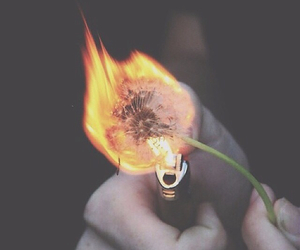 fire, flowers, and grunge image