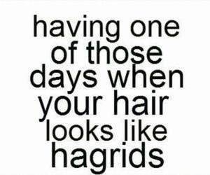 funny, hair, and hagrid image