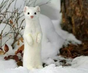animal, snow, and white image