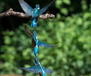 birds, flowers, and hummingbird image