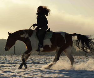 equestrian, forever, and horse image