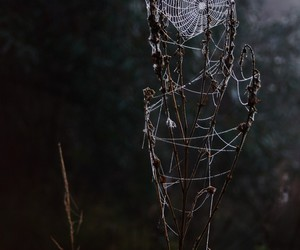 black, photography, and spider image