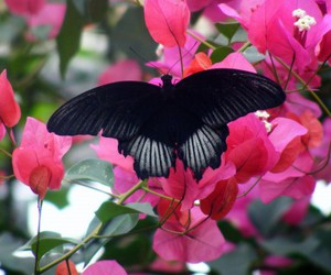 black, butterfly, and flowers image