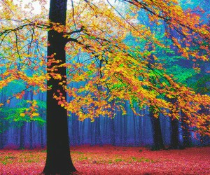 beutiful, colors, and nature image